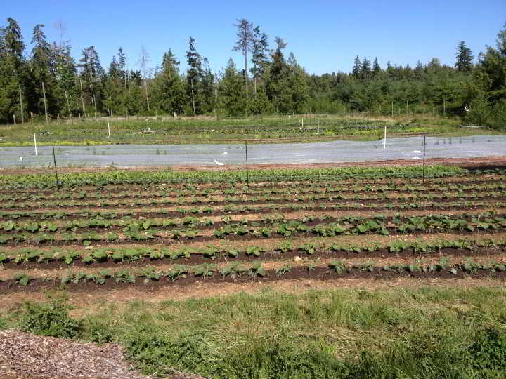 Straight rows of Organic farm nourish need a farm worker needed to help