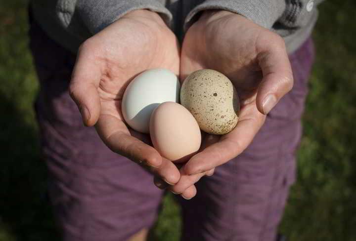 Yasodahara Ashram - Eggs