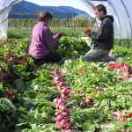 JOB: 5 Full-Time Positions Open at Wild Flight Farm, Mara, BC