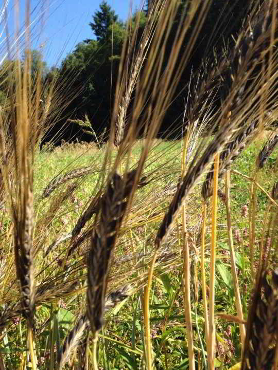 Job Young Agrarians Land Matching