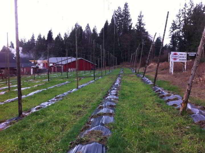 Farm job persephone brewing company