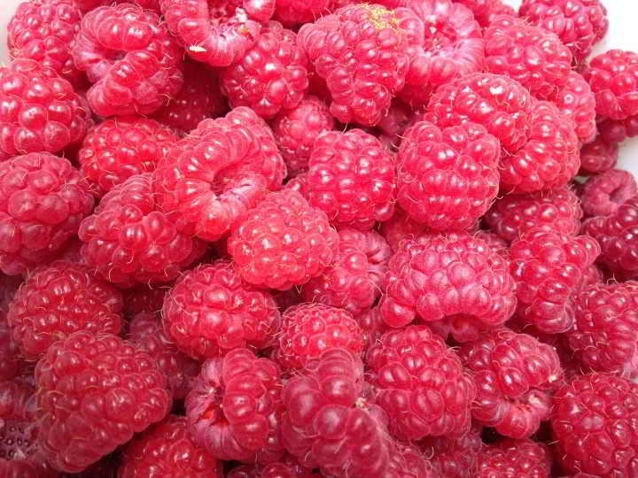 Food Processing Forum raspberries