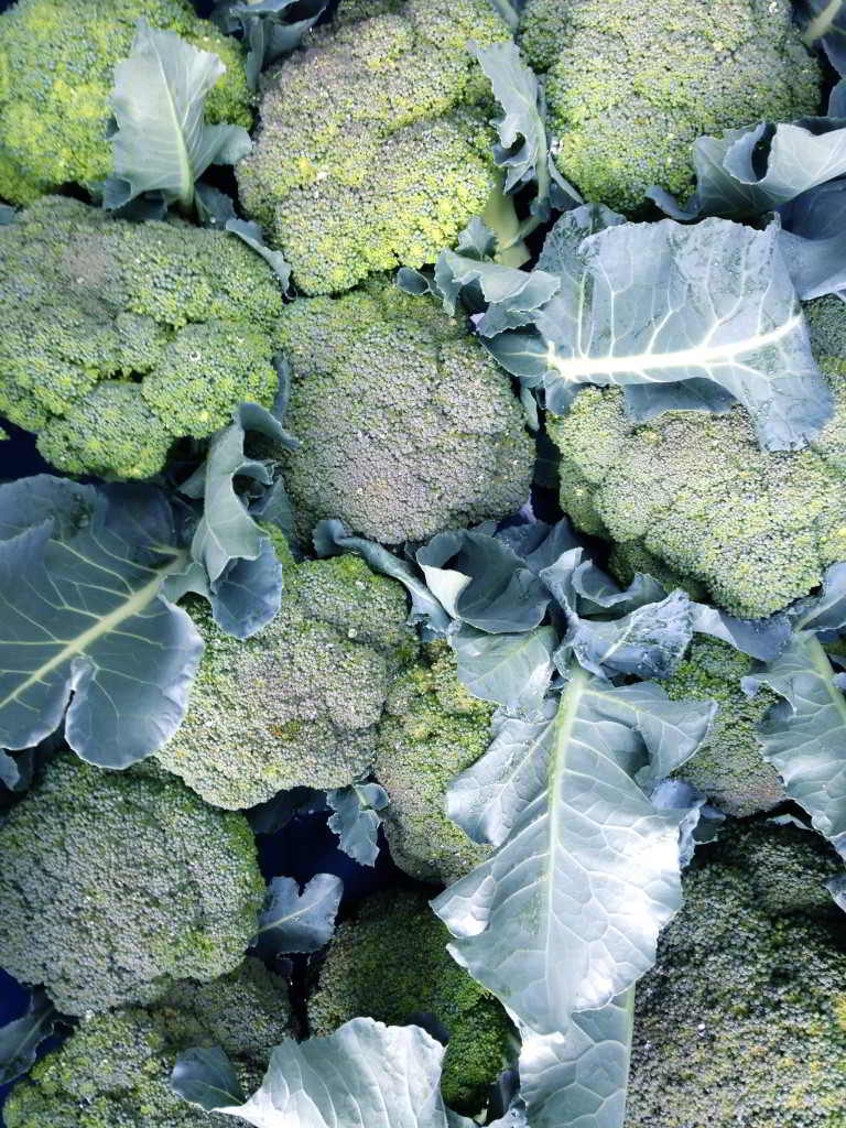 farm events food processing forum broccoli