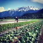 Business Mentorship Network – Plenty Wild Farms, Pemberton, BC
