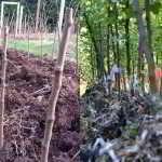 INTERNSHIP: Denman Island Heritage Apple Trees