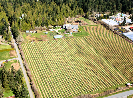 View of Ruby Red Farm