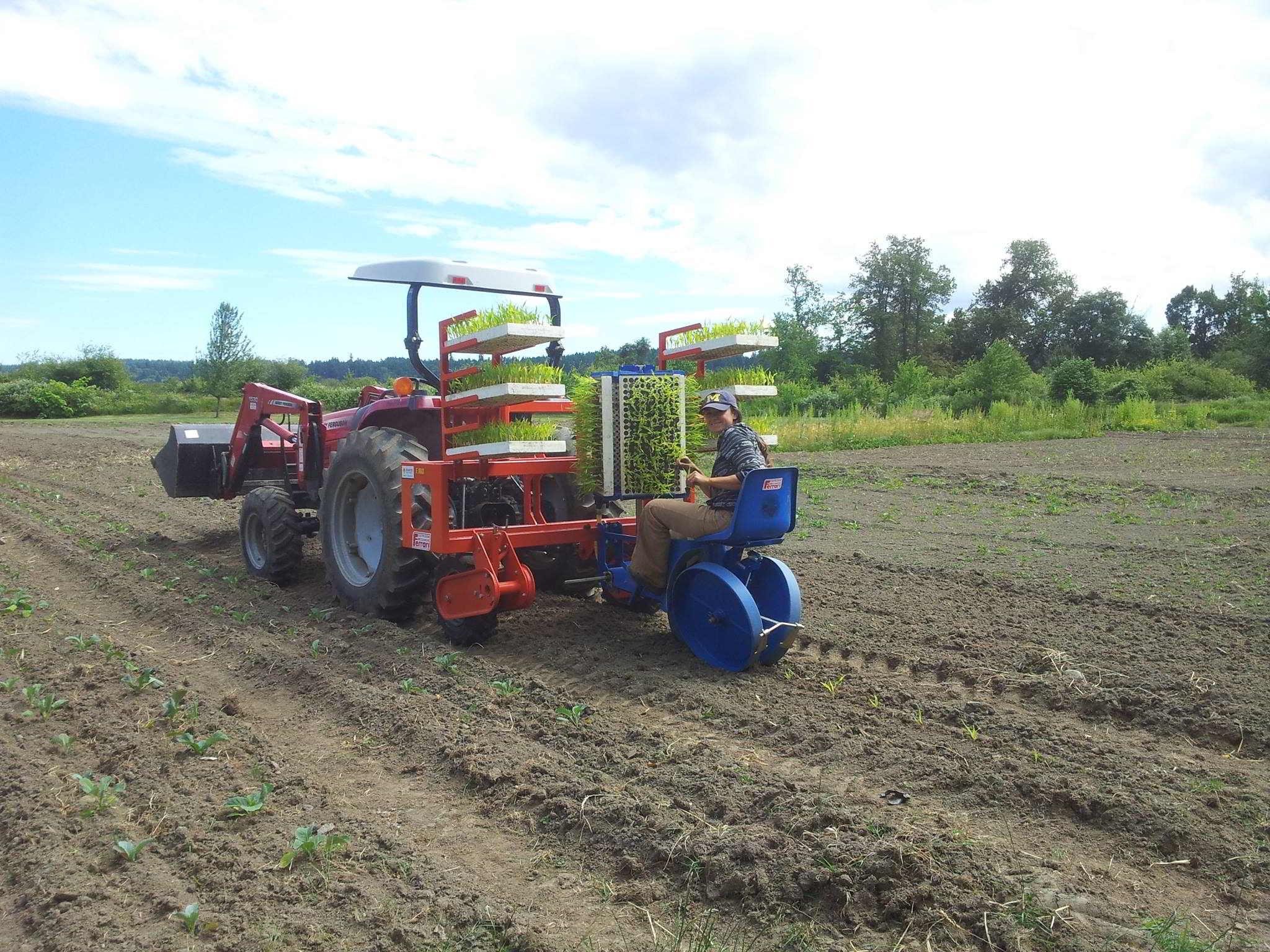 Corn Transplant Speedling Trays Alderlea Farm Duncan BC