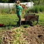 #foodandlabour 1/3: Ecological Farming with Interns and Volunteers in Ontario
