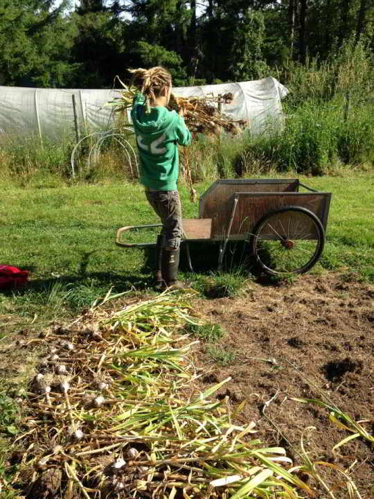 Farming through Interns and Volunteers
