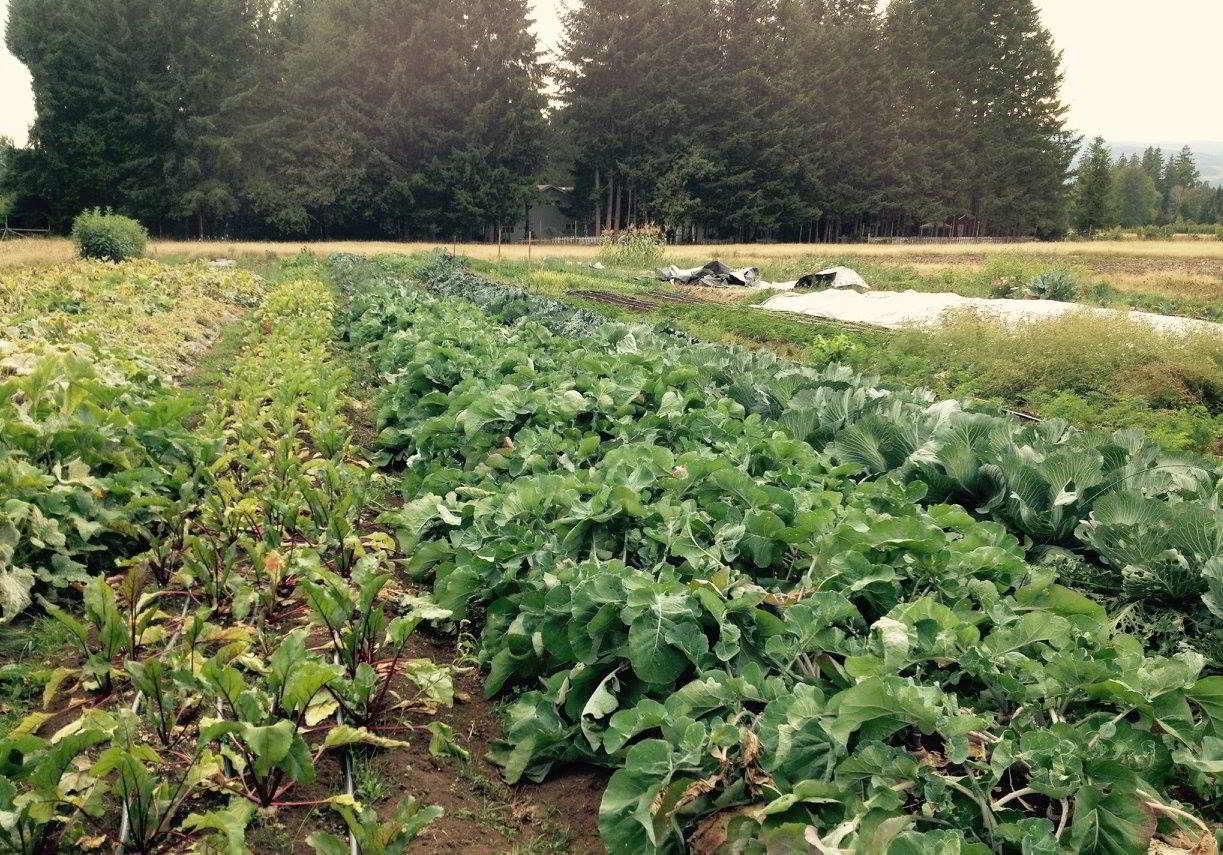Kloverdalen Farm Tour Potluck Courtenay BC