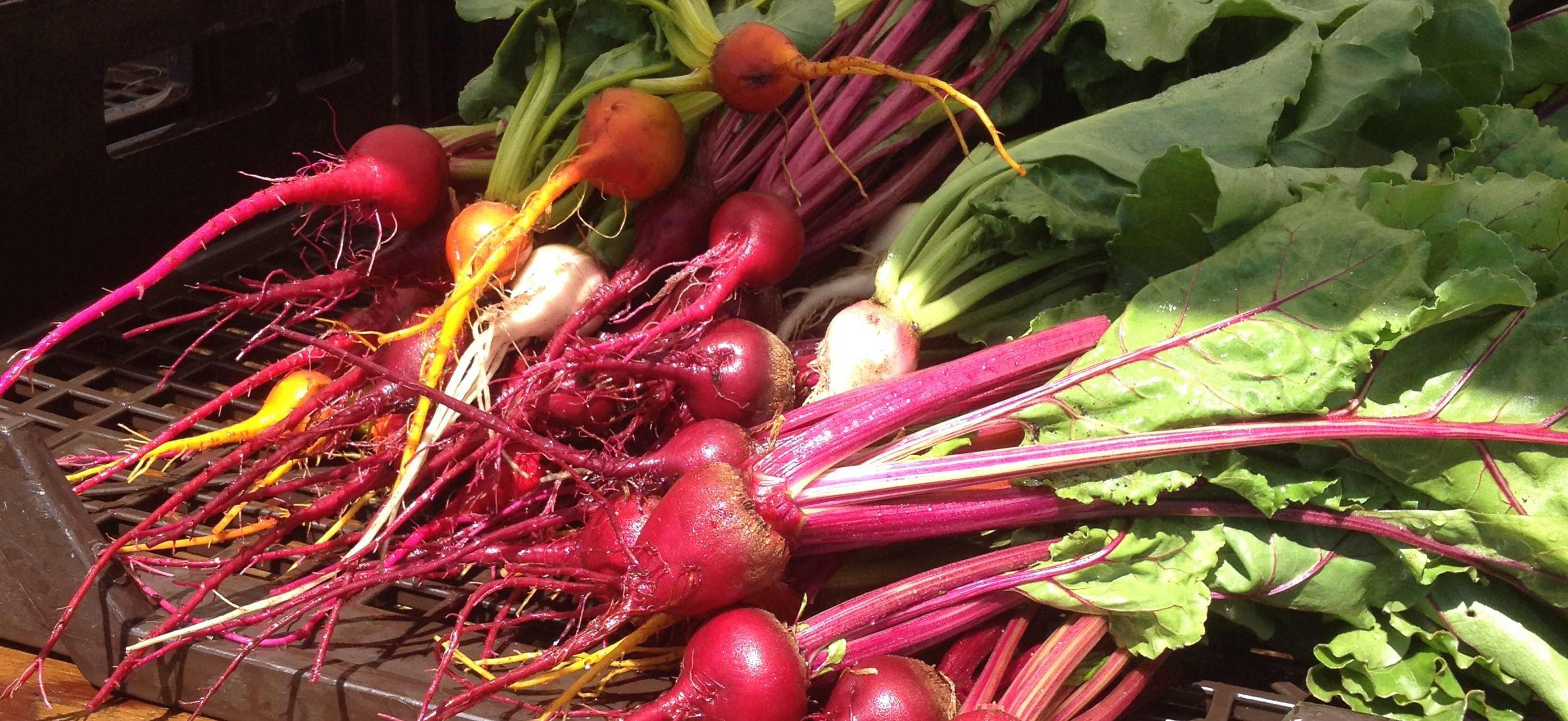 Farm Jobs Earth Apple Farm Abbotsford