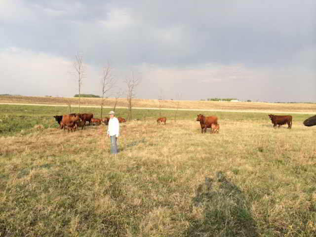 Land Saskatchewan Breadroot Farm