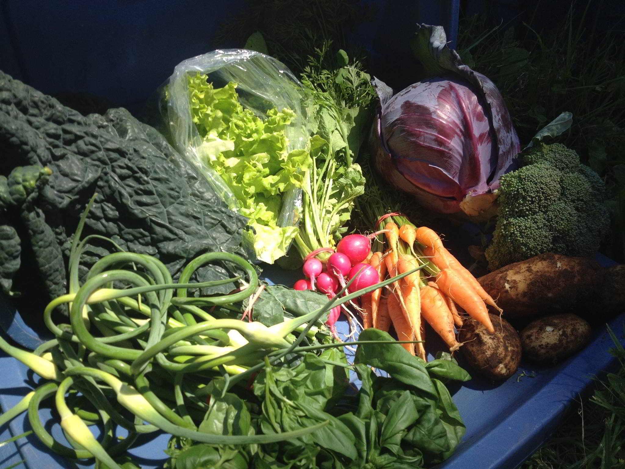 Merville Organics Cooperative - Farm Co-op