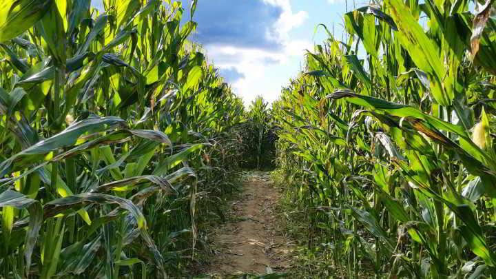 Land Match Agreements - navigating the regulatory labyrinth