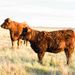Aug 3: Castor, AB Holistic Management Workshop Planning for Success into the Next Generation of Farmers and Ranchers