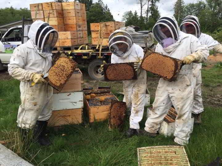 KPU Beekeeping course