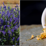 WORKSHOP: Production of Asian Medicinal Herbs