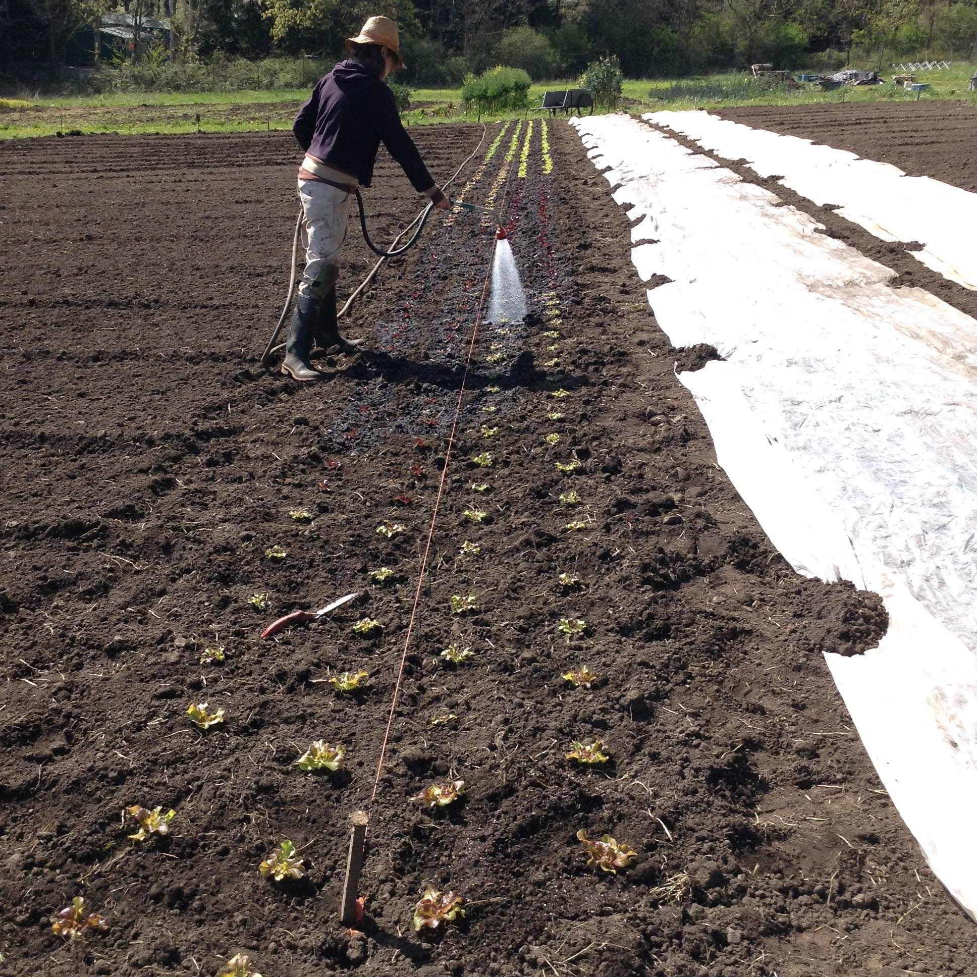 Farm Job Saanich Organics