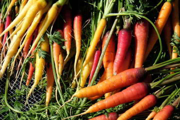 Give Green: Colourful bunches of carrots