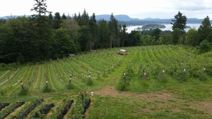 Farm Job Salt Spring Apple Company