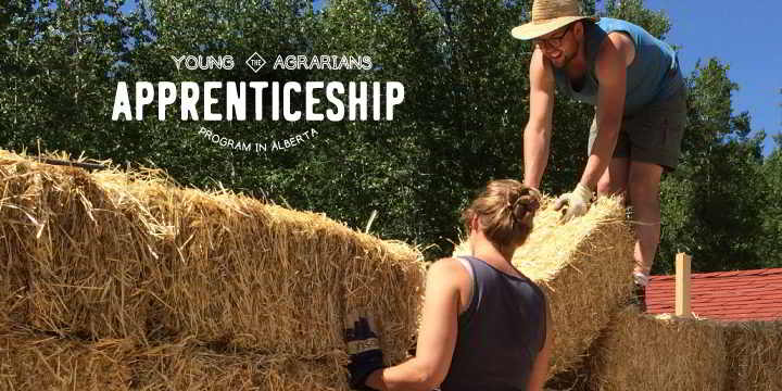 2019-Farm-Apprenticeship-Homestead