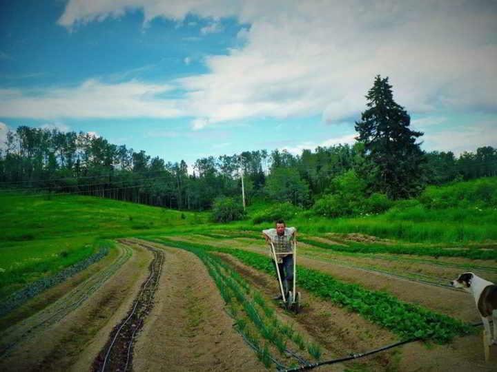 Internship Hope Farm Organics