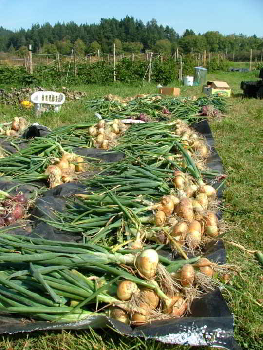 Lohbrunner Community Farm Co-operative