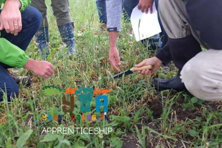 duban-apprenticeship