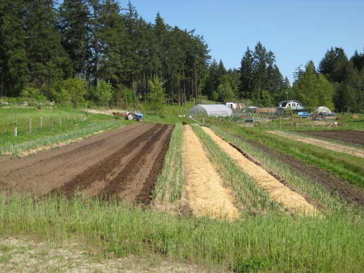Duck Creek Organic Farm Fields on Salt Spring Island