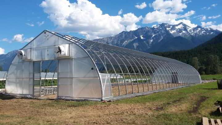 plenty-wild-greenhouse