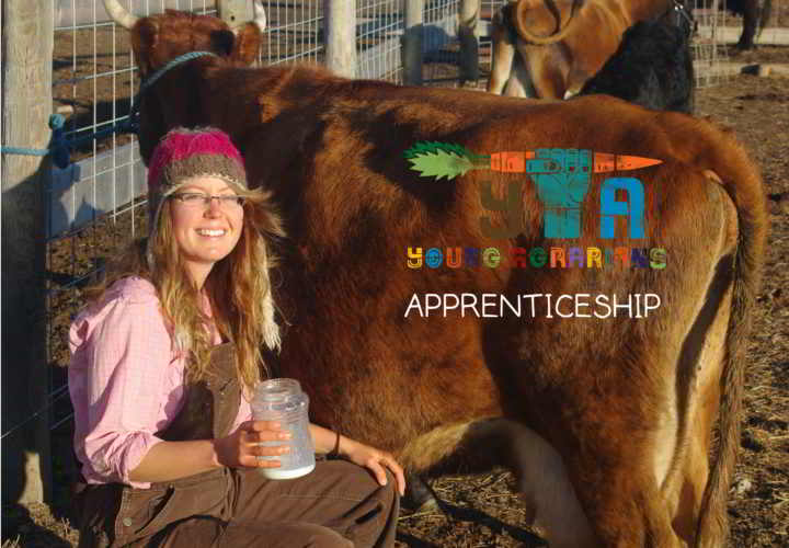 apprenticeship-lisa-tagged