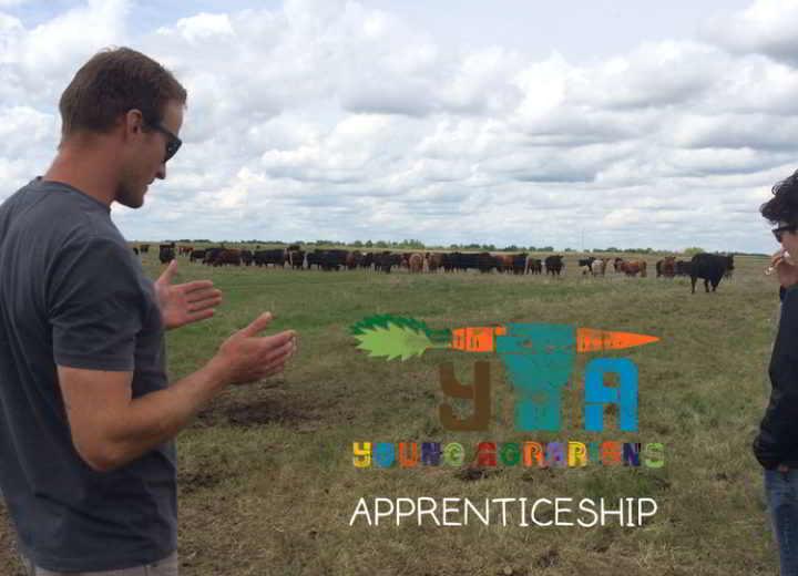 ian-apprenticeship