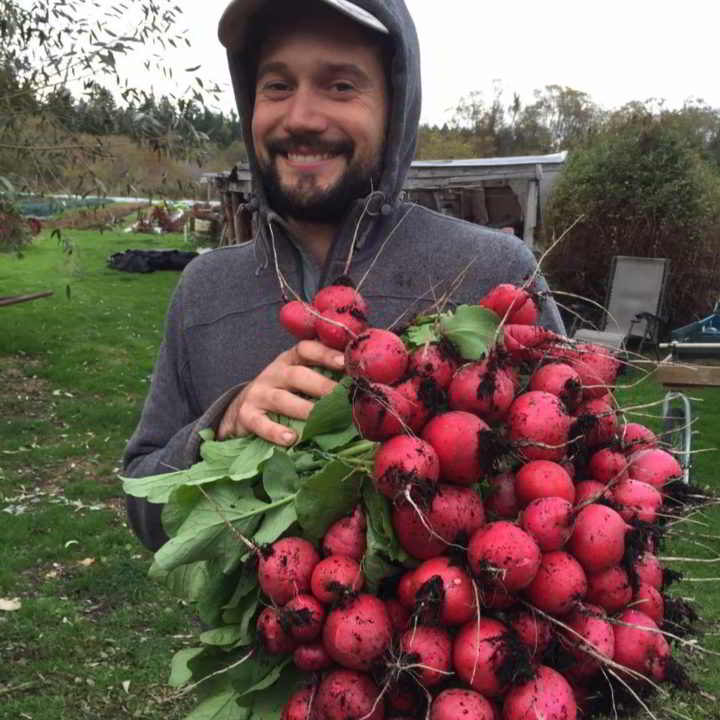 Graham Bradley of Gabriola Food Hub holds an armful of rosy Radishes