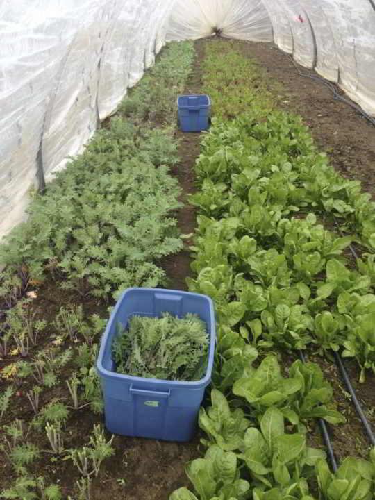 Farm Job Medley Organics