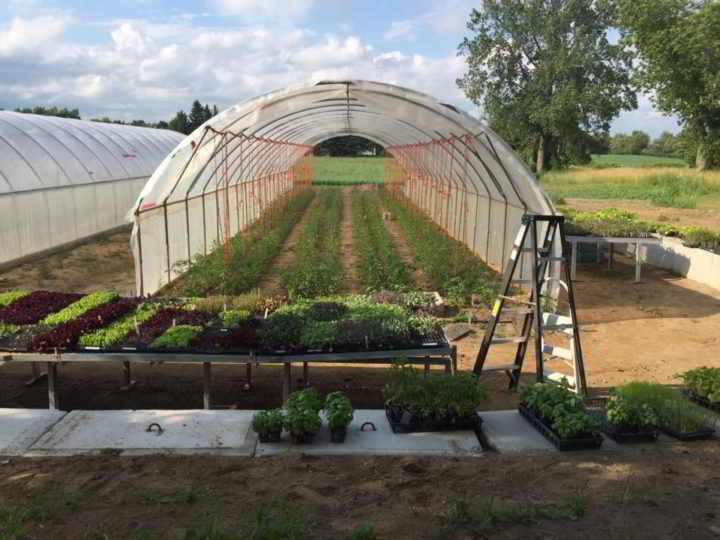 Internship Blue Wheelbarrow Farm
