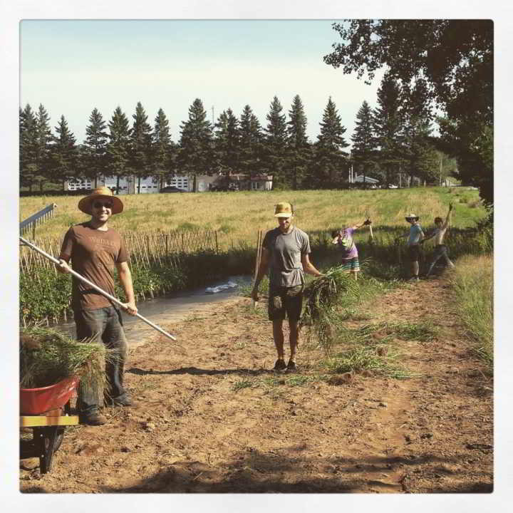 Internship Blue Wheelbarrow Farm