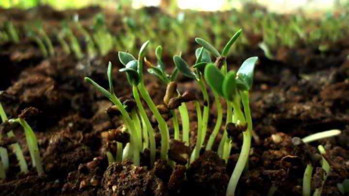Soil and seedlings
