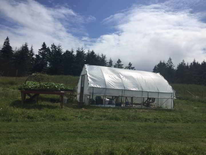 Active Pastures greenhouse