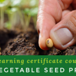 ONLINE COURSE: Organic Vegetable Seed Production Certificate