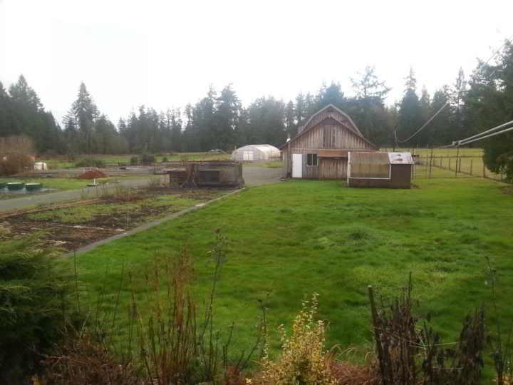 Dancing Dandelion Farm Fields