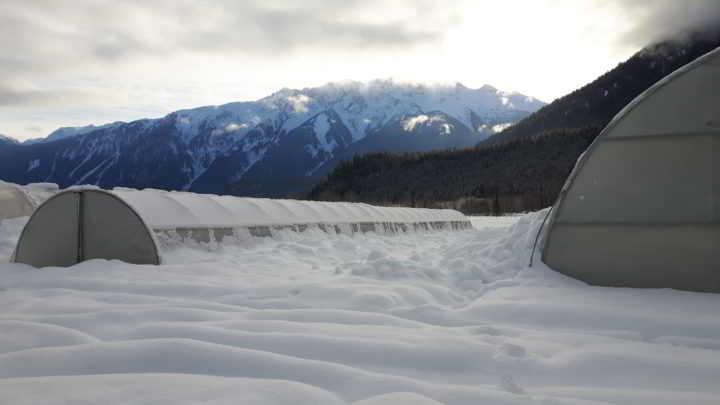 Plenty Wild Farms Greenhouses piled with white snow against purple pemberton mountains