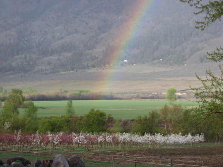 Rainbow at Snowy Mountain Farm