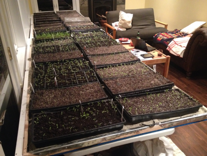 Seedlings are started in trays inside the farm house at Paradise Valley Produce