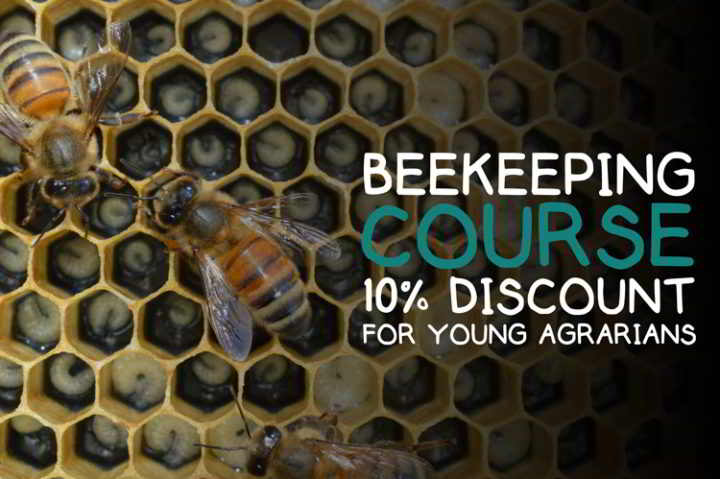 beekeeping-workshop