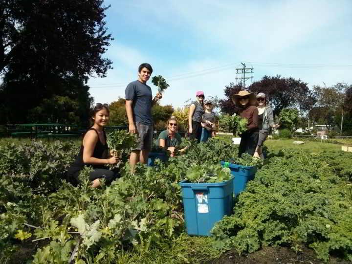 Fresh Roots Urban Farm Society