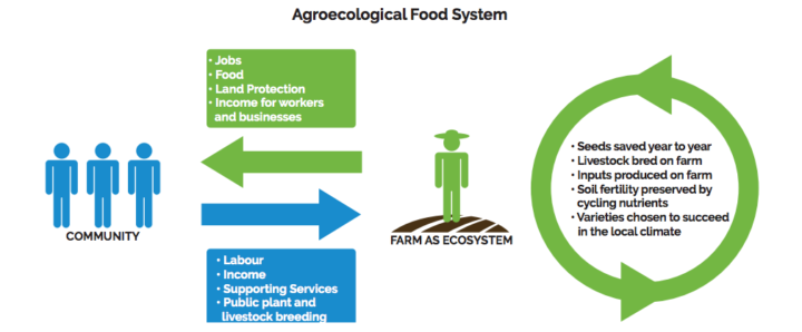 Agroecology in Action: Agroecological Food System