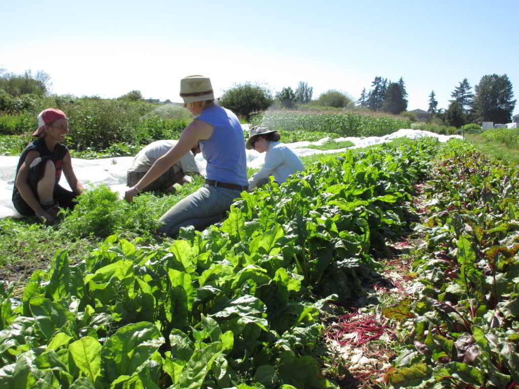 The july fields of sweet digz farm