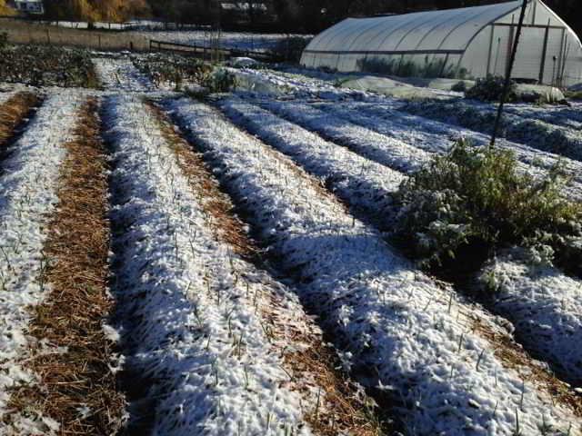 Farm job victoria bc demitasse market garden at for Gardening qualifications