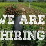 FARM JOB: PITT MEADOWS, BC – Blue Magic Greenhouses Ltd.