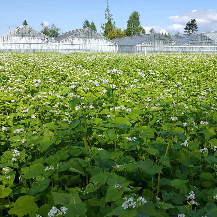 Blue Magic Greenhouses is hiring!